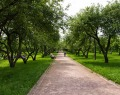 Вознесенский яблоневый сад