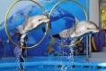 Летний дельфинарий в Измайловском парке
