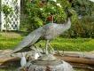 Фонтан «Счастья вольная птица»