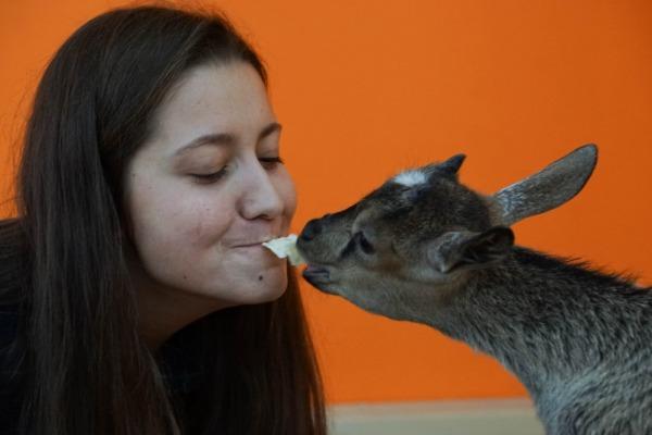 Трогательный зоопарк «Погладь енота»