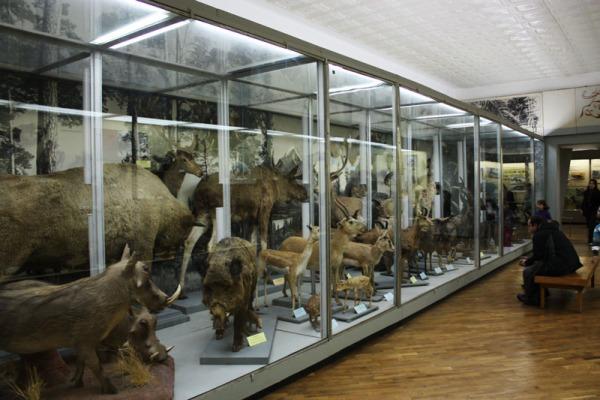 Зоологический музей