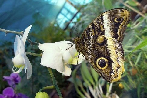 Московский дом бабочек