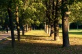 Парк «Дубки»